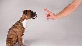 Nepodceňujte výchovu štěněte! Starého psa novým kouskům totiž nenaučíte...