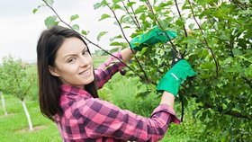 Čas prořezávání ovocných stromů právě nastává.