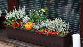 Jak teď osázet truhlíky, aby byly krásné celou zimu? Gondíci vám poradí!