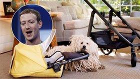 """Facebook na dva měsíce přijde o šéfa. Zuckerberg za to má 220 tisíc """"lajků"""""""