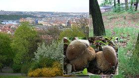Houby rostou i v Praze: Za úlovky houbaři mohou vyrazit třeba na Petřín