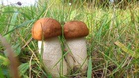 Místo k vodě běžte na houby. O víkendu bude zataženo a místy zaprší
