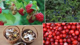 Češi šetří: Pro borůvky a maliny jdou raději do lesa než do obchodu