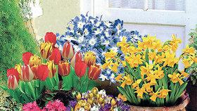 Užijte si podzim se speciální nabídkou květin z nového katalogu společnosti BAKKER