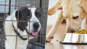Zvířat je v útulích na osm tisíc. Na vině jsou hlavně nelegální množírny
