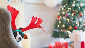 Nebezpečné Vánoce: Na co si dát pozor při svátcích s domácími mazlíčky