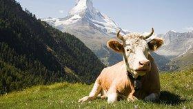 Vegance odmítlo Švýcarsko udělit občanství. Stěžovala si na jeho slavné krávy
