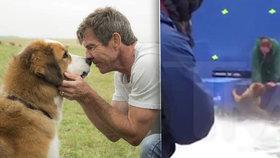 Šokující video týrání ovčáka z natáčení filmu Psí poslání: Někdo ho zfalšoval!