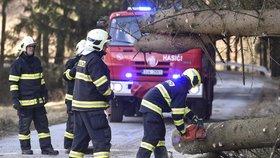 Vítr pustoší Česko: Spadlý strom zabil řidiče, lidé jsou bez proudu