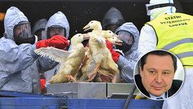 Kvůli chřipce vybili 100 tisíc ptáků. Odborník se zlobí a zdraží nám maso?