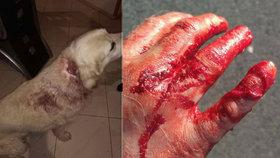 Krvavé zranění a strach o život pejska: Majitel druhého psa z místa utekl, neznáte ho?