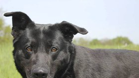 Syndrom černého psa není jen mýtus, říká expertka. Čeho se Češi bojí?