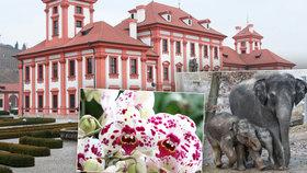 Pražská Troja: Tři v jednom! Navštivte zoo, zámek i botanickou zahradu