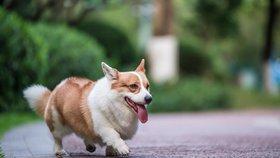 Ujistěte se, že mají hlídaní psi dostatek pohybu.