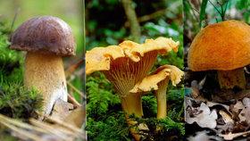 Stromy a houby si spolu rozumí: Přečtěte si, které druhy hub najdete pod kterým stromem!