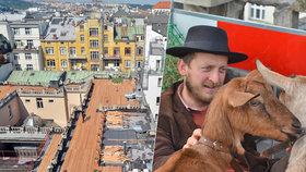 Kozy vyměnil za králíky a slepice. Kobza opět otevřel střechu Lucerny