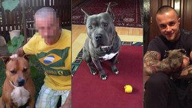 Pozor na vraha ze Slovenska, varují chovatelé: Ujímá se psů, jen aby je prodal na zápasy