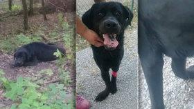 Lidské zvěrstvo: Nemocného psa někdo odložil v lese, tam čekal týden na záchranu