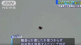V Japonsku uteklo z tiskové konference klíště infikované smrtelným virem.