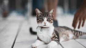 Chcete zvýšit své šance v soutěži Kočka Česka 2017? Poradíme vám, jak na to!
