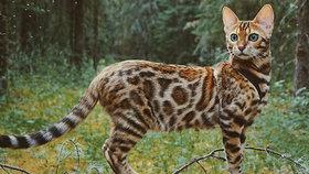 Nádherná kočka Suki se svými majiteli procestovala svět. Nebojí se ani na lodi!