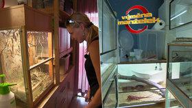 Nepříjemné překvapení ve Výměně manželek: Byt plný červů, sarančat a ještěrek!