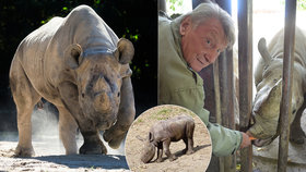 V Africe uhynula vzácná samice ze Dvora Králové: Eliška (†5) nepřežila šarvátku s nosorožcem