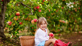 Které ovocné dřeviny sázet na podzim a jak na to, aby se uchytily