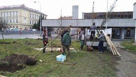 Strom za stromem: Praha 7 má novou zeleň, vynahradilo se i řádění vichřice
