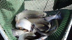 Ryby ztrácejí ostražitost. V řekách jsou antidepresiva