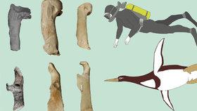 Vědci našli fosilii prehistorického tučňáka. Byl velký jako dospělý člověk