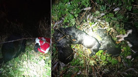 Lidský hyenismus: V Břeclavi někdo do ledové Dyje hodil igelitku se štěňaty