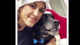 Vánoční zázrak: Psího dědečka si konečně adoptovali jen pár dnů před smrtí