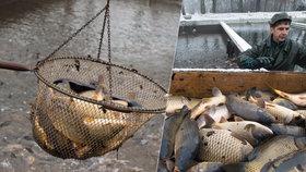 Nevracejte kapry do řeky, způsobíte jim tím jenom bolestivou smrt, radí odborníci