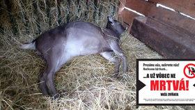 Smutný Štědrý den v chuchelském zookoutku: Kvůli neukázněnosti návštěvníků uhynula dvě zvířata