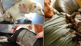 Dojemné video ochránců zvířat: Těmto pejskům jsme letos pomohli, pomozte i vy, vyzývají