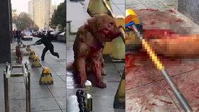 Policista brutálně umlátil na ulici retrívra: Tyčí ho bil 3 hodiny!