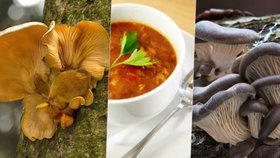 Houbařit můžete i v zimě! Podívejte se, jaké houby najdete v lese pod sněhem