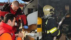 Požár kuchyňské linky v Bohnicích: Hasiči z plamenů zachránili tři lidi, dvě kočky a psa