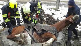 Záhada! Kůň na Břeclavsku se »napasoval« do obří pneumatiky! Nikdo nechápe, jak to dokázal
