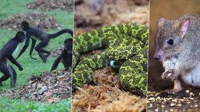 Pražská zoo se pochlubila: To jsou naše poklady!