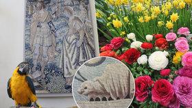 Historické tapisérie, tisíce květin: Na výstavu na Pražském hradě dohlíží i papoušek