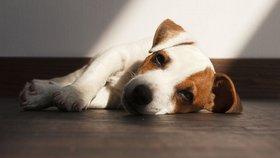 4 jednoduché tipy, jak ochránit domácí mazlíčky před klíšťaty a blechami