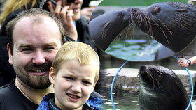 Pusinkování a akrobatická show: Lachtani zahájili sezónu v pražské zoo