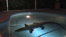 Obří aligátor vlezl rodině do bazénu. Zavolala na něj policii
