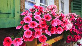 Nechte okna a balkóny rozkvést! Osázejte je jarními květinami