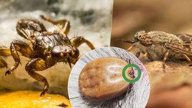 Zabiják psů, látající klíště i jedovatý pavouk: Co na vás čeká na mezích a loukách?