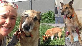 Sraženého pejska zachraňovali slavní herci: Dingo už chodí!