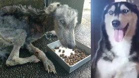 Z kostřičky ve vypelichaném kožíšku zdravý hafan: Pes byl tak vyhublý, že nešlo poznat, jaké je rasy