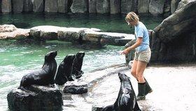 Zvířata před návštěvníky nedokážeme úplně ochránit, shodují se české zoo